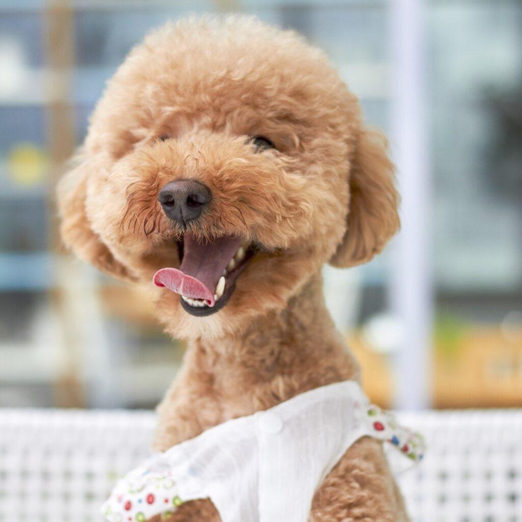 Recommended dog vet