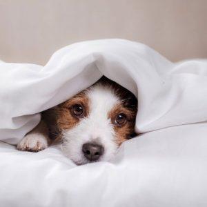 Dog-Euthanasia-1024x682